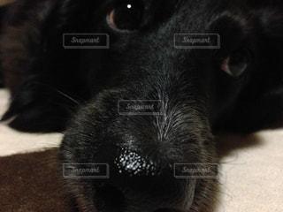 No.228640 犬