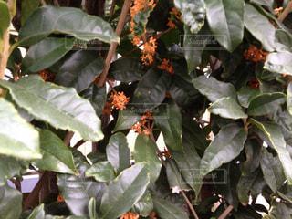 秋の写真・画像素材[226699]