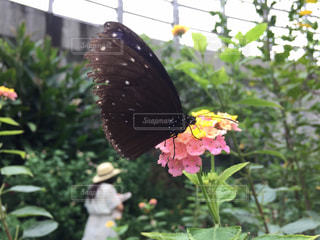 自然の写真・画像素材[226733]