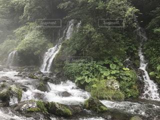 自然の写真・画像素材[650578]