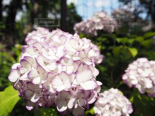 近くの花のアップの写真・画像素材[1234451]