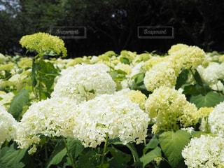 近くの花のアップの写真・画像素材[1234455]