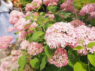 植物にピンクの花の写真・画像素材[1234459]