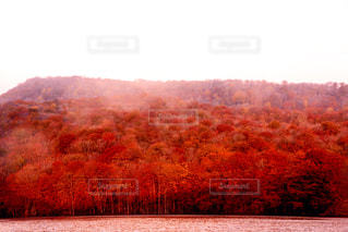 自然の写真・画像素材[288338]