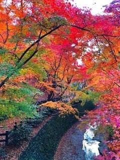 木の花の花瓶の写真・画像素材[262]