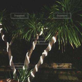 ツリーの横にあるヤシの木のグループの写真・画像素材[261]
