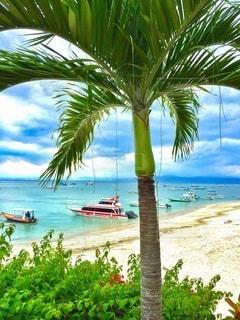 水の体の横に座っているヤシの木とビーチの写真・画像素材[249]