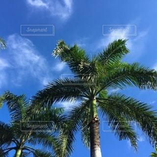 ツリーの横にあるヤシの木のグループの写真・画像素材[236]