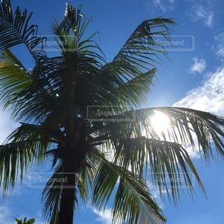 ヤシの木の横にある砂浜のビーチの写真・画像素材[234]