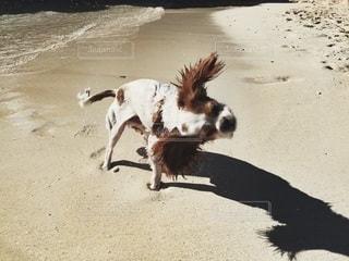 ビーチの上を歩く犬の写真・画像素材[207]