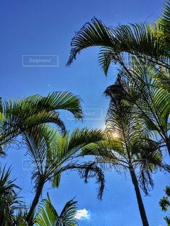 ツリーの横にあるヤシの木のグループの写真・画像素材[142]