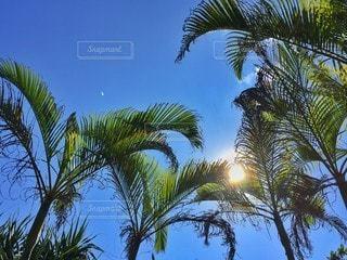 ツリーの横にあるヤシの木のグループの写真・画像素材[141]