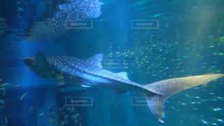 水族館の写真・画像素材[227775]