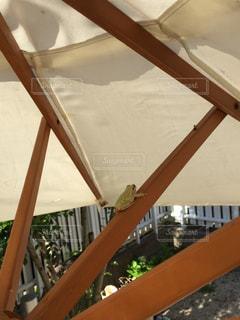 カエルの写真・画像素材[227781]
