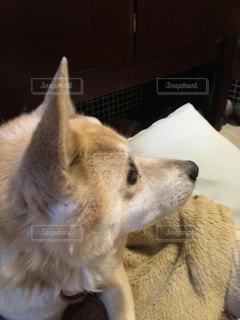 可愛い犬の写真・画像素材[1060736]