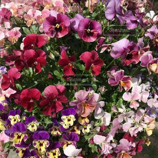 春のお花の写真・画像素材[1065566]