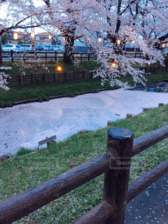 春 - No.227932