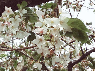 春の写真・画像素材[458536]