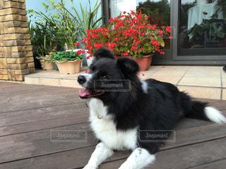 No.227973 犬