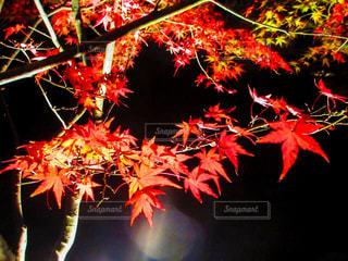 秋の写真・画像素材[228144]
