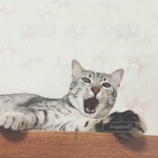 No.228313 猫