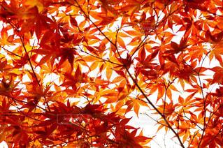 オレンジの木の上に座っているの束 - No.824082