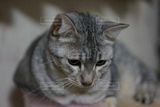 近くに猫のアップの写真・画像素材[824107]