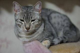 近くに猫のアップの写真・画像素材[824111]