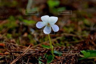 自然の写真・画像素材[437734]