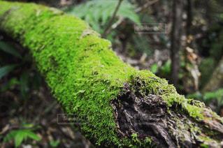 自然の写真・画像素材[437735]