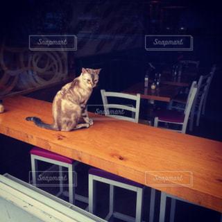 猫の写真・画像素材[228484]