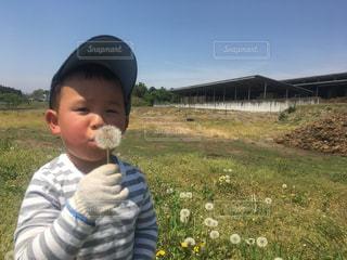 いくつかの草を食べている男の子の写真・画像素材[1291839]