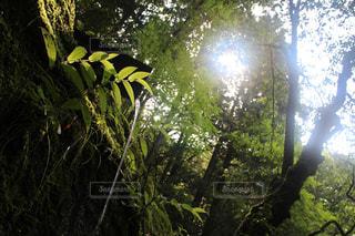 自然の写真・画像素材[613280]