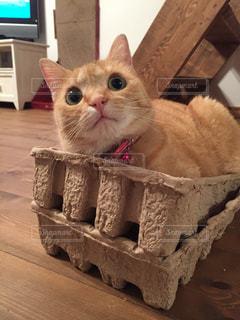 猫の写真・画像素材[228858]