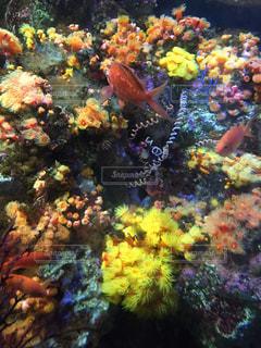 魚の写真・画像素材[228865]