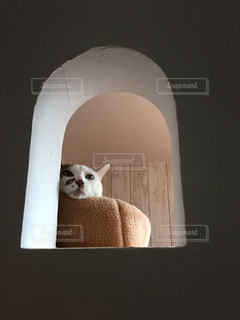 猫の写真・画像素材[228881]