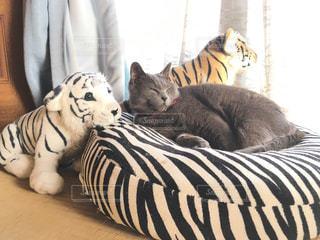 猫 - No.122113