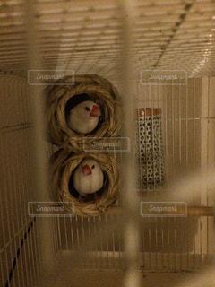 鳥の写真・画像素材[229076]