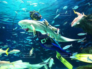 魚 - No.229093