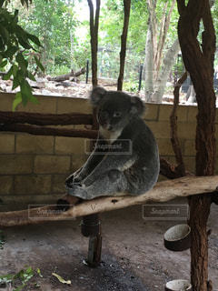 動物の写真・画像素材[229905]
