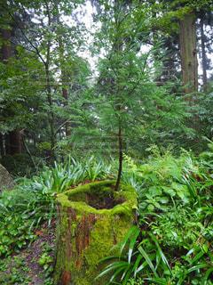 森林 - No.234814