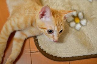 猫の写真・画像素材[229407]