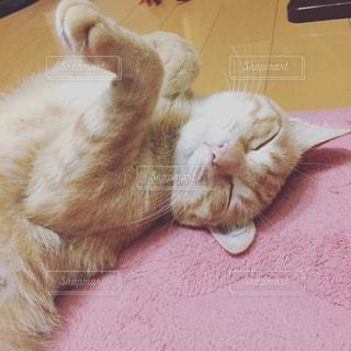 猫の写真・画像素材[229410]