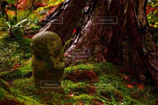 秋の写真・画像素材[229449]