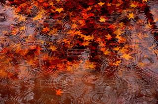 秋の写真・画像素材[229452]