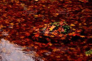 秋の写真・画像素材[229453]