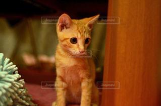 猫 - No.230942