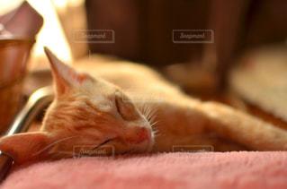 猫の写真・画像素材[230943]