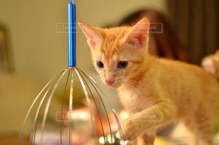 猫の写真・画像素材[230944]
