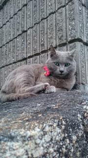 猫の写真・画像素材[295719]